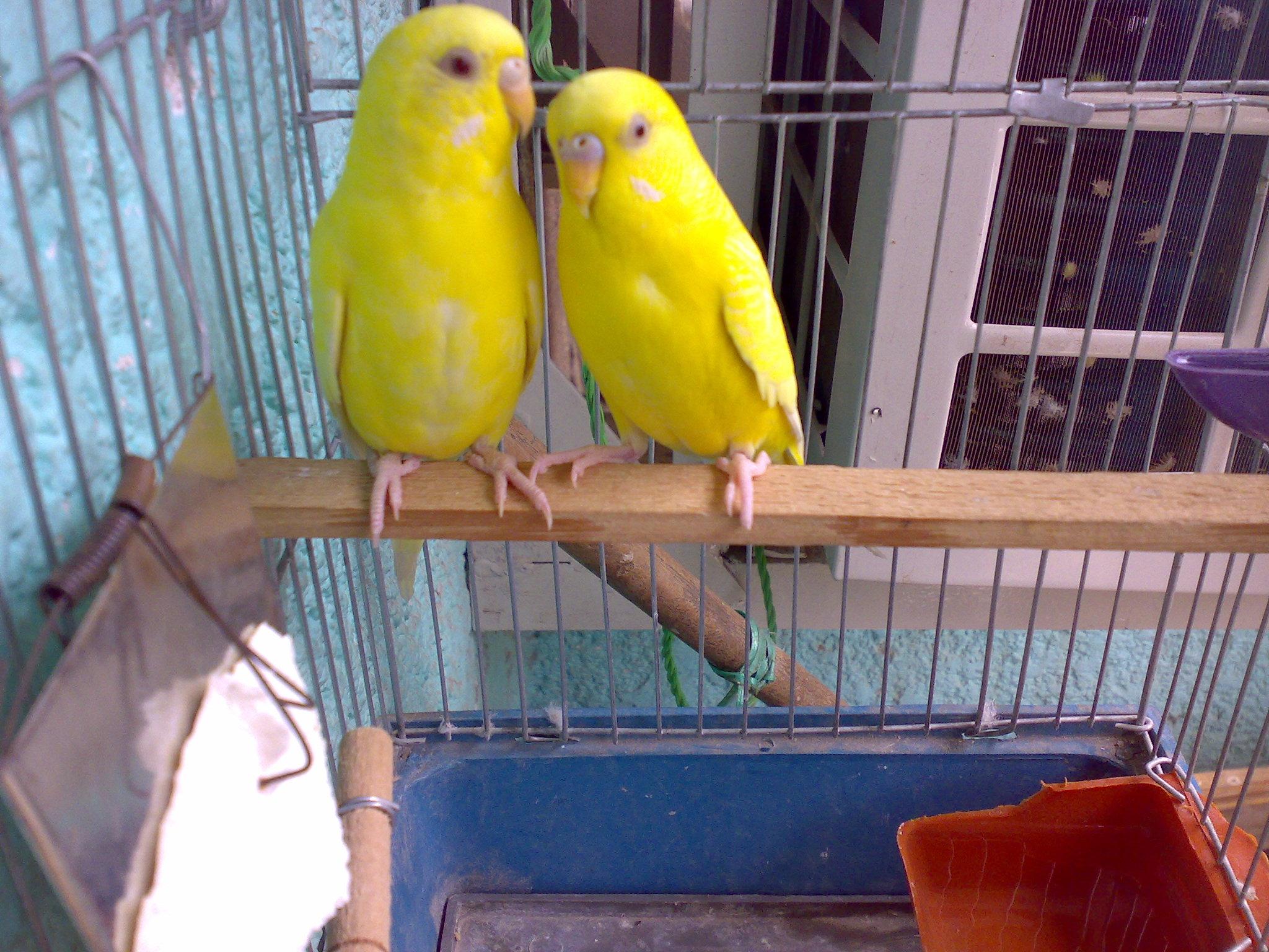 74a49f577d64d الطَّائِر – Bird  الطيور مدونة سليم بن عاقل