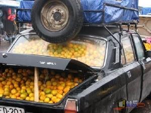 إبداع = سليم عاقل (95) برتقال- سيارة - كفر